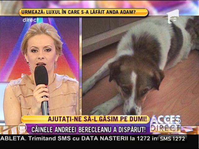 Andreea Berecleanu şi-a pierdut căţelul