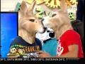 Răzvan și Dani, cei mai simpatici canguri!