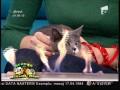 Candice Dragotă spune cum să-ți obișnuiești pisica cu un anumit tip de mâncare