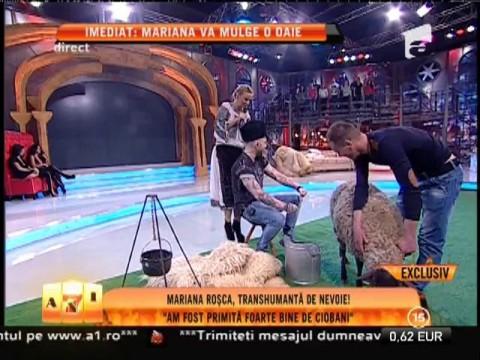 Mariana Roşca, transhumantă de nevoie!