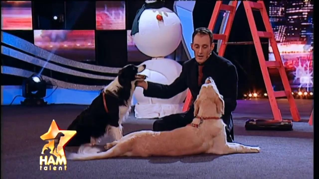 Spectacol canin la înălțime! Oli și Mira nu au dezamăgit nici în finala Ham Talent! Ce reprezentație au oferit