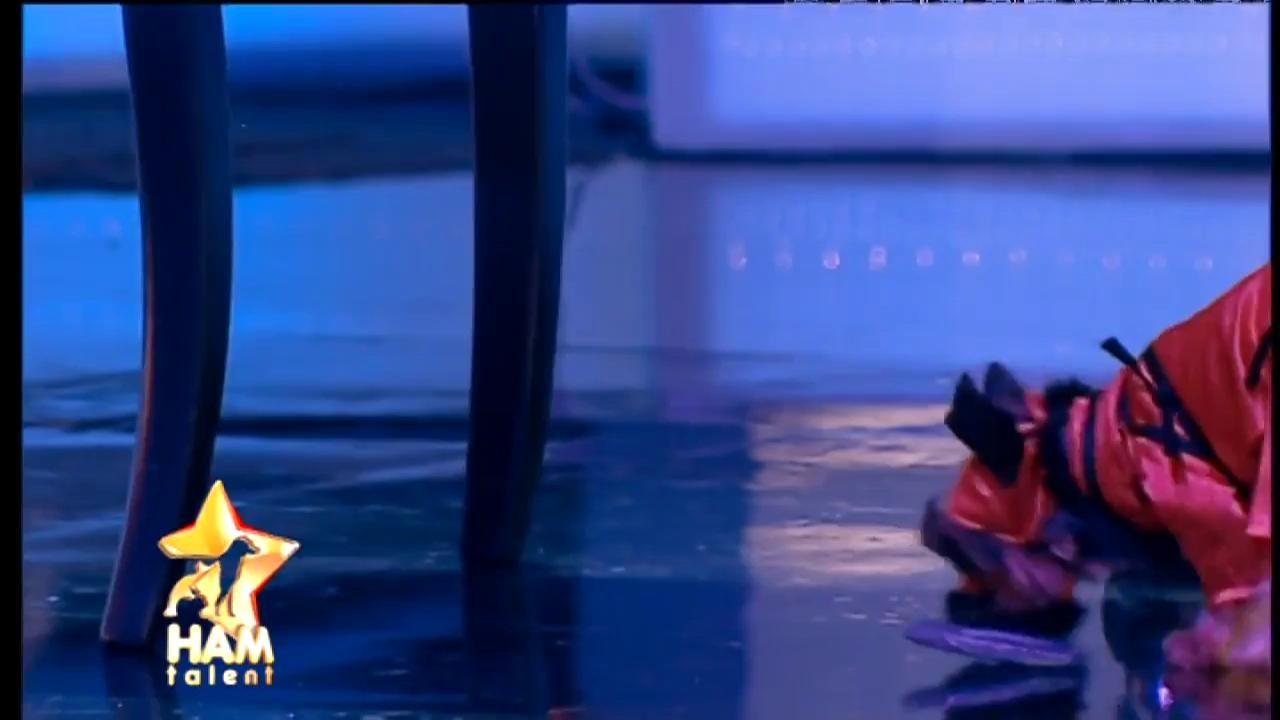 Hulk, câinele karatist, l-a speriat până și pe Pitbull Atodiresei! Ce show a făcut în marea finală