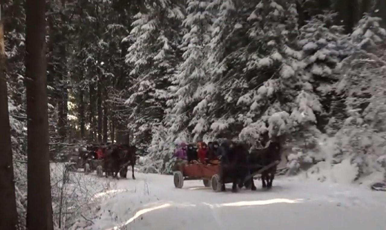 Un altfel de 8 martie: Cu căruța prin pădure