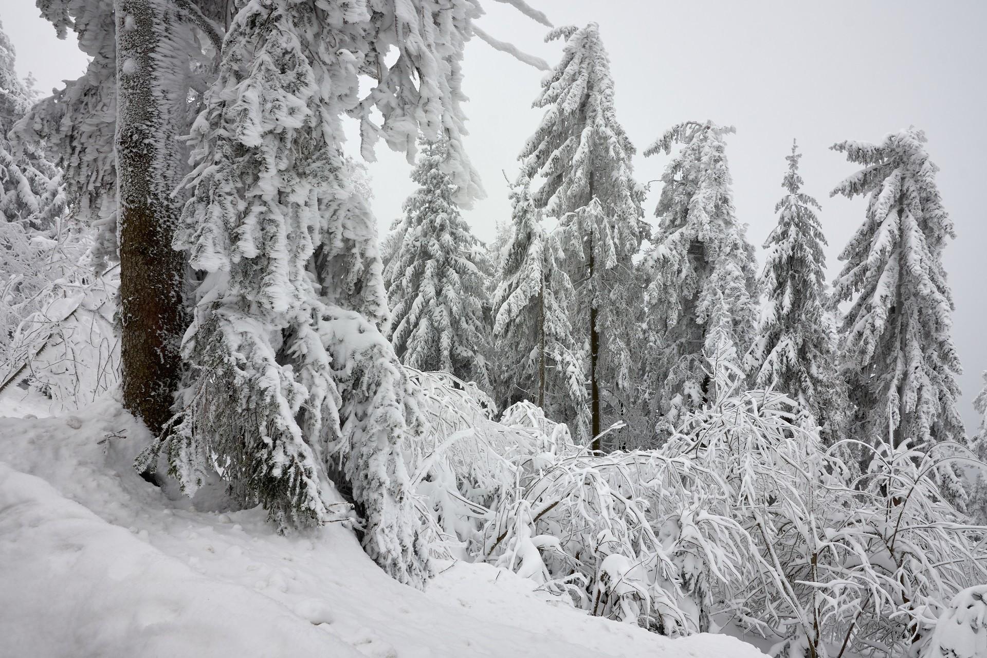toni pierdere în greutate zăpadă