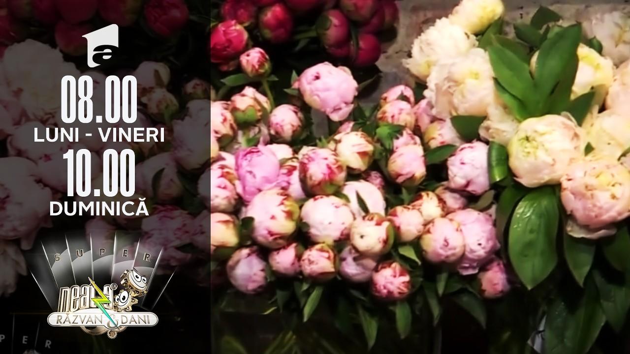 Bujorii, florile vedetă ale lunii mai