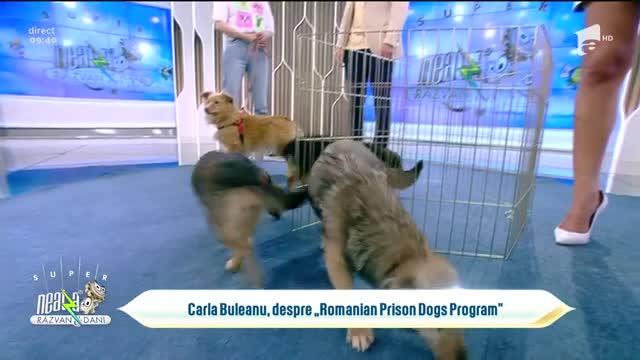 Care sunt condițiile și cum se desfășoară procesul de adopție al unui câine