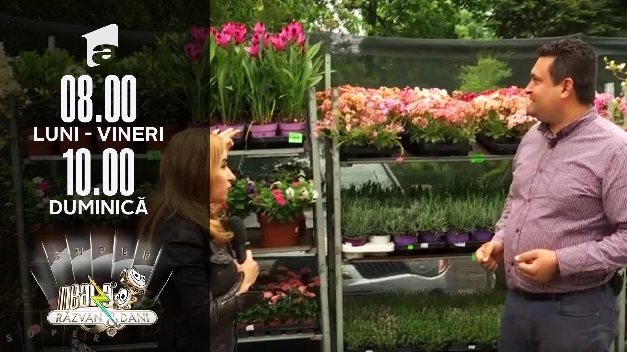 Cum să-ți transformi grădina sau terasă într-un colț de rai cu ajutorul florilor