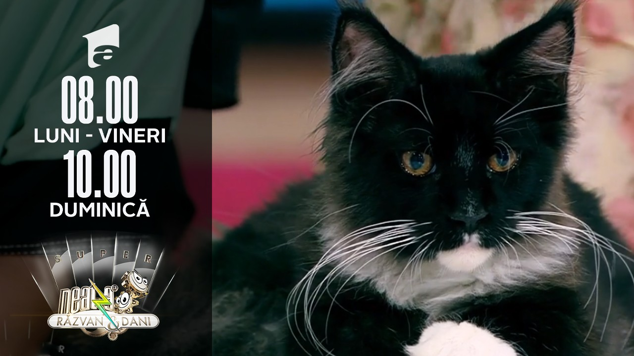 Cele mai mari pisici domestice din lume, în direct, la Neatza de Weekend
