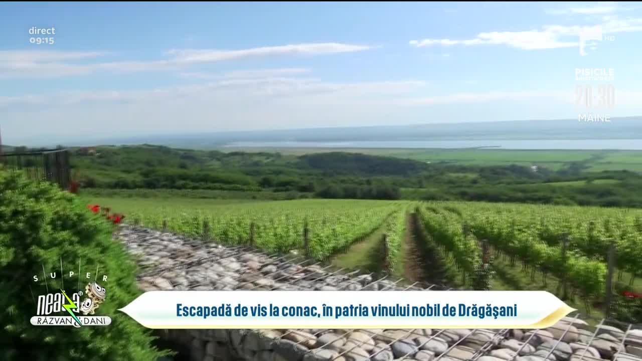 Escapadă de vis la conac, în patria vinului nobil de Drăgășani