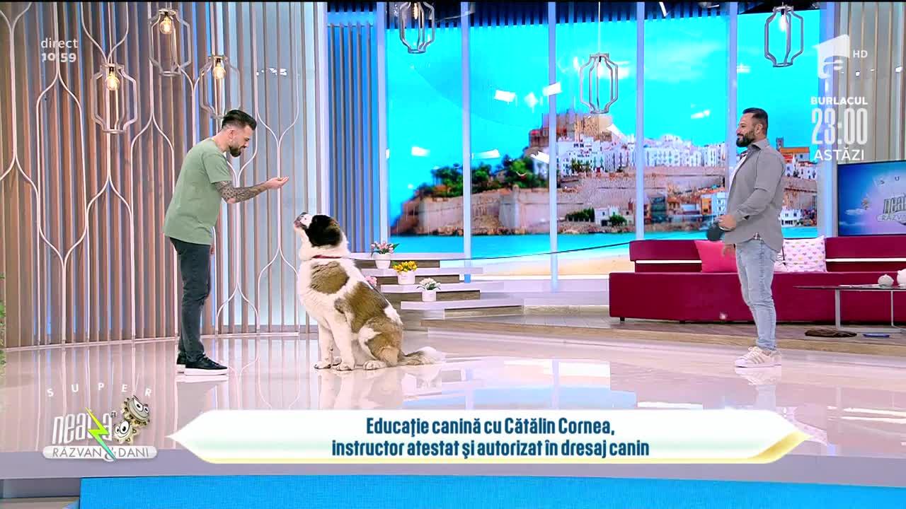 Educație canină cu Cătălin Cornea, instructor atestat și autorizat în dresaj canin