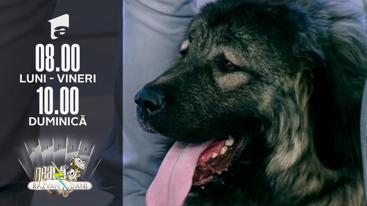 Cum îngrijim corect un câine rasa Ciobănesc Caucazian