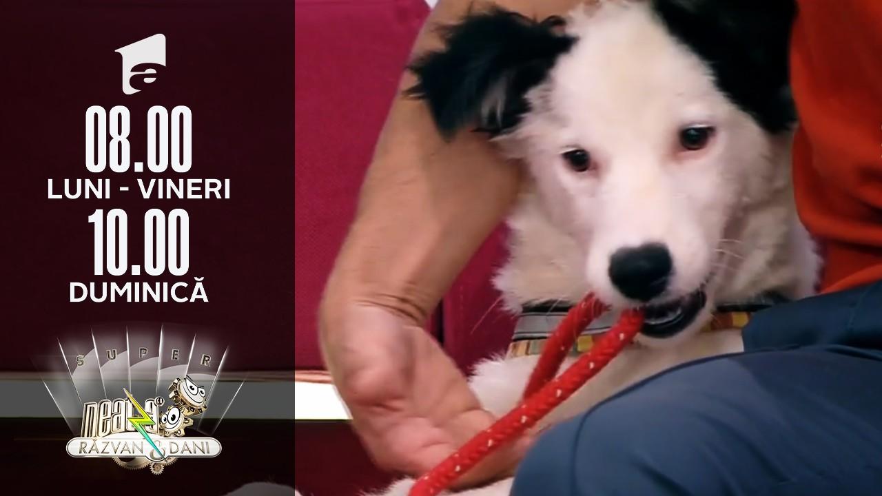 Super Neatza, 14 iulie 2021. Recuperarea câinilor după operație