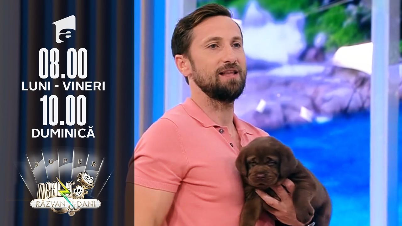 Super Neatza, 16 iulie 2021. Totul despre creșterea și îngrijirea unui câine rasa Labrador Retriever