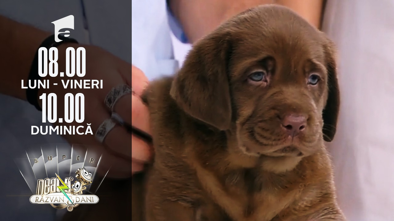 Neatza de Weekend, 25 iulie 2021. Totul despre creșterea și îngrijirea unui câine din rasa Labrador Retriever