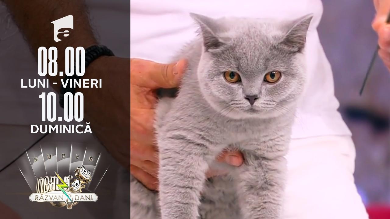 Super Neatza, 29 iulie 2021. De ce trebuie să ținem cont când adoptăm sau cumpărăm o pisică