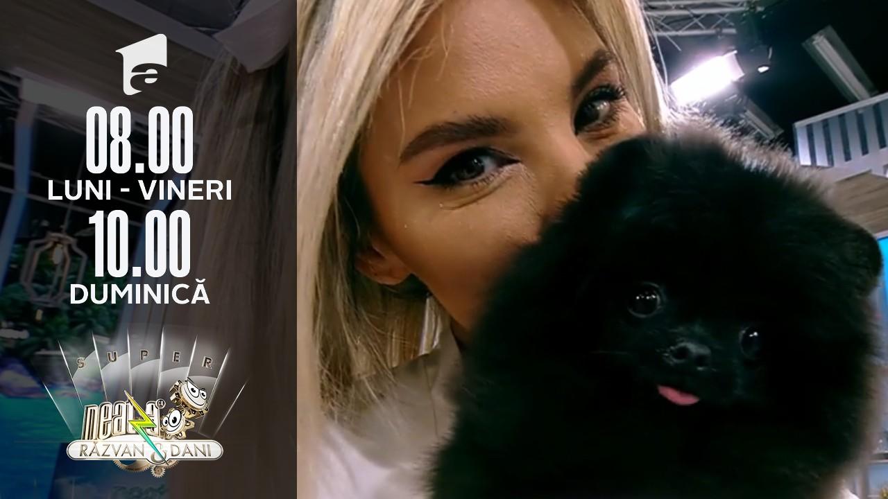 Super Neatza de Weekend, 5 septembrie 2021. Totul despre cățeii din rasa Pomeranian
