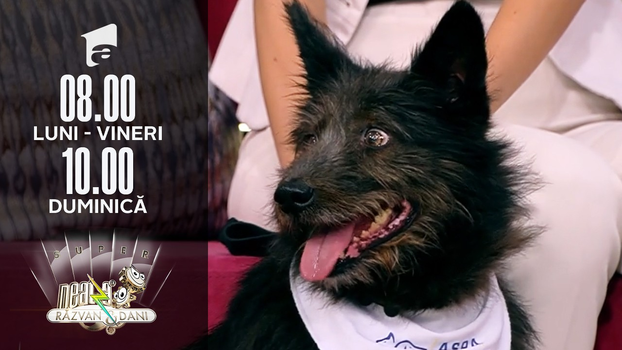 Super Neatza, 14 septembrie 2021. Cum putem adopta un câine