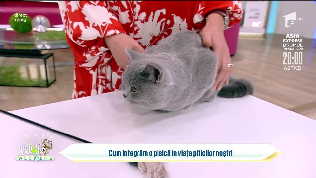 Neatza de Weekend, 26 septembrie 2021. Ce trebuie să știm înainte de a adopta o pisică