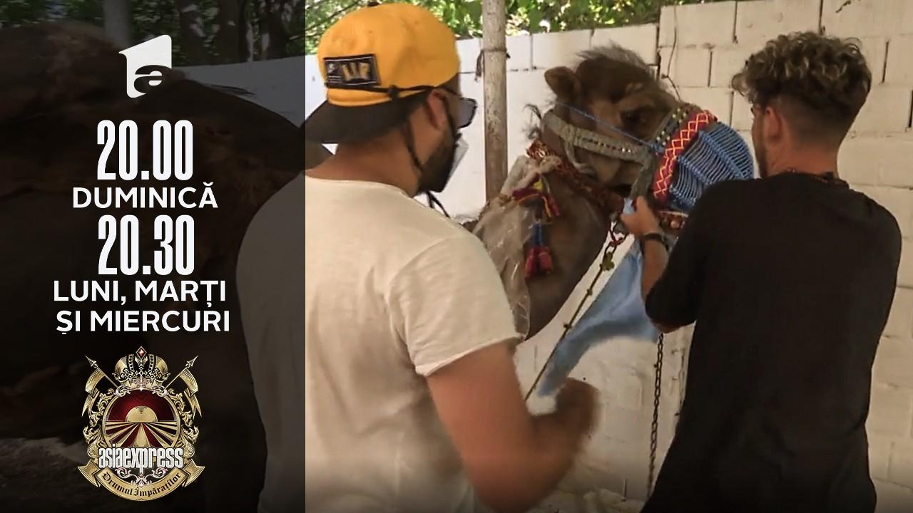 Asia Express sezonul 4, 28 septembrie 2021. Cuza a fost atacat de o cămilă! Concurenții trebuie să îmbrace animalul cu brățări și colier