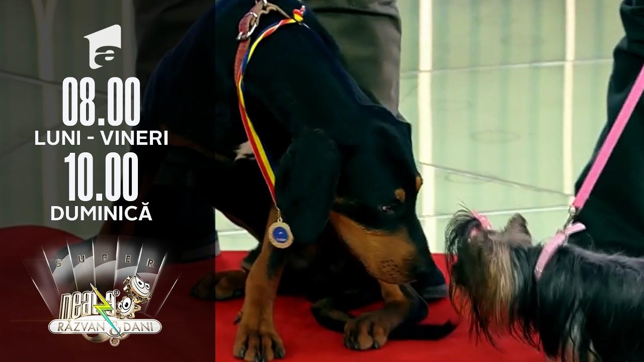 Super Neatza, 6 octombrie 2021. Expoziție canină