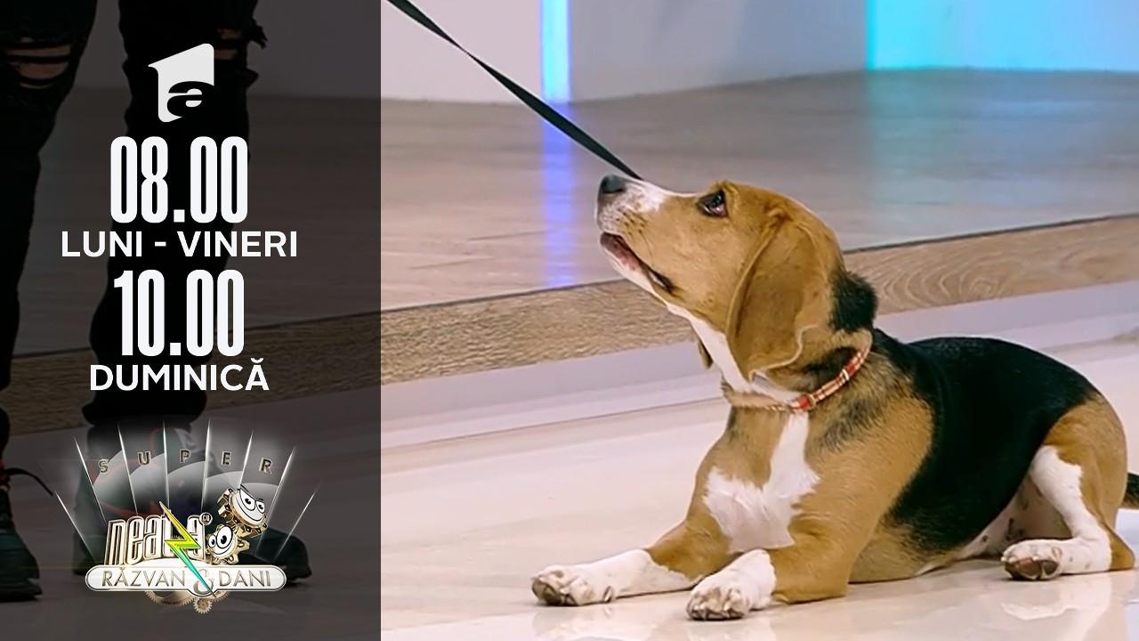 Super Neatza, 12 octombrie 2021. Regulile de bază în dresajul canin
