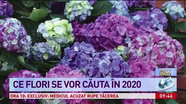 Florile anului 2020 - ce flori se vor căuta în noul an